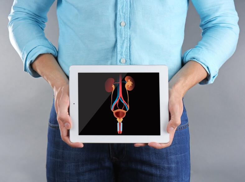 Prostata – její funkce a anatomie